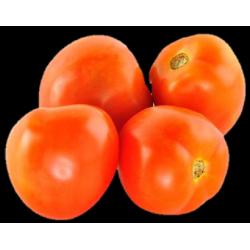 Tomate Chonto x Lb
