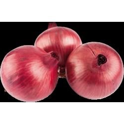 Cebolla Roja x Lb